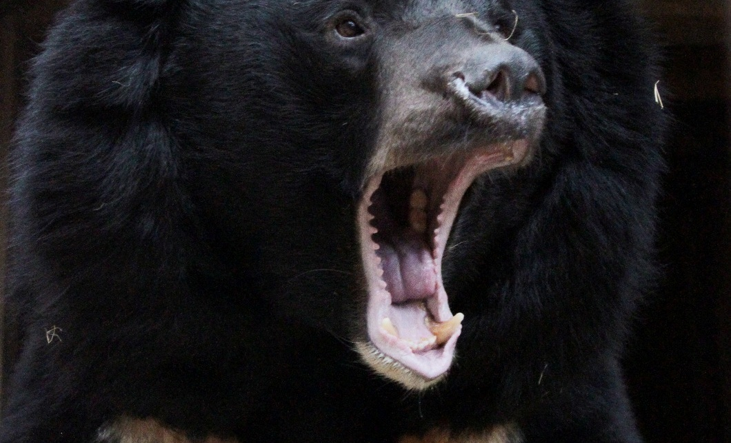 Взоопарке Екатеринбурга из-за теплой погоды медведи вышли изспячки