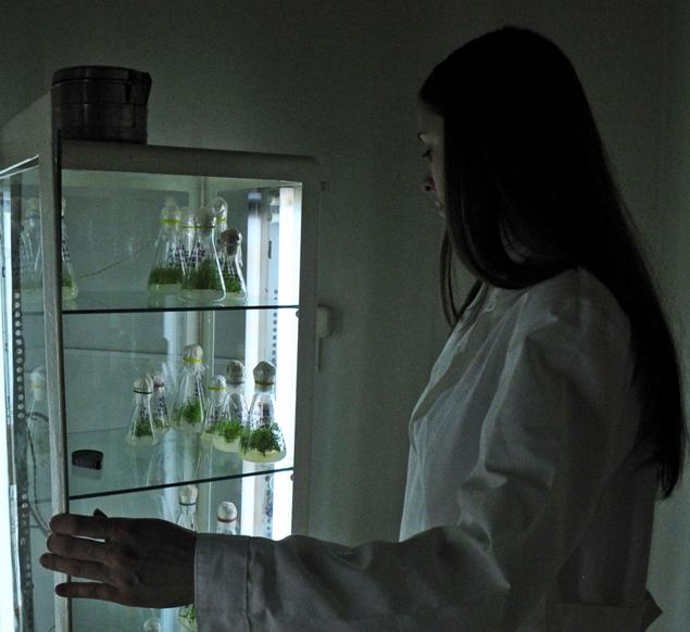 Пущино. Института физико-химических и биологических проблем почвоведения РАН. Ученые-криптобиологи  вернули к жизни растение, которое исчезло 30 тысяч лет назад.