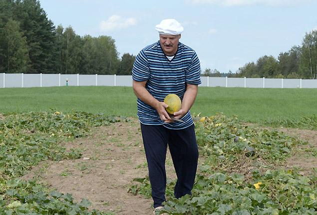 Александр Лукашенко собирал дыни босиком. Фото: president.gov.by
