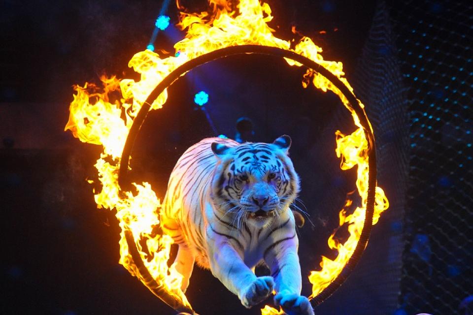 Девять лучших идей, куда сходить на выходные в Москве 17-18 июля 2021: Цирковое шоу, монологи покойников и хиты 90-х