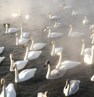 алтай лебединое озеро