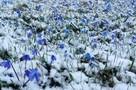 В Белгородскую область идет похолодание – к концу недели ожидается дождь со снегом