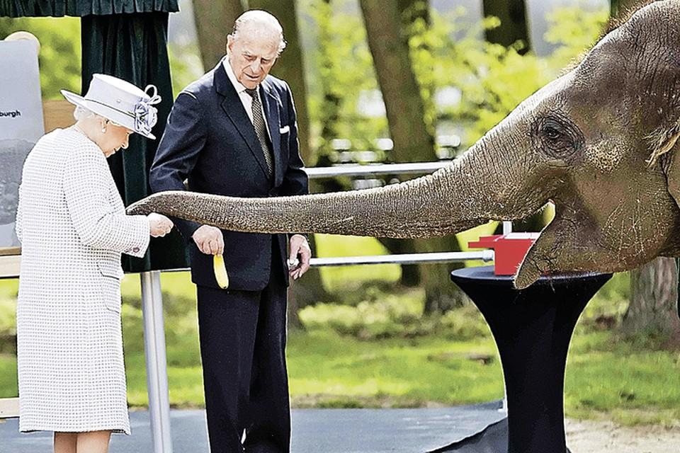 На «ланче» со слонами Елизавета II выглядела в добром здравии, что порадовало многих ее подданных. Ведь в последнее время королева редко появлялась на публике, говорили даже, что она серьезно больна. Фото: Davis Rose/Pool/REUTERS