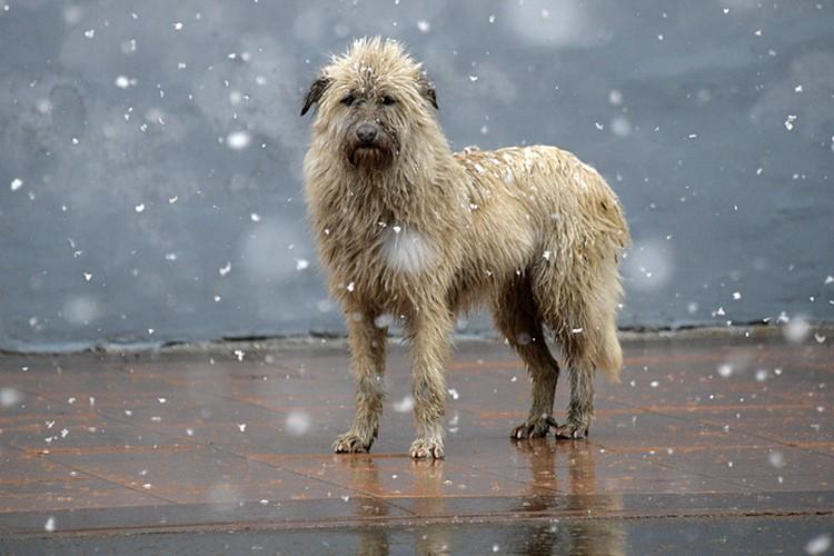 В такую погоду хороший хозяин собаку из дома не выгонит
