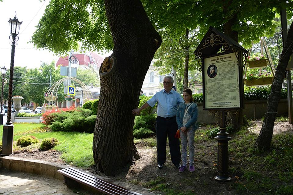 Картинки по запросу деревьям ставрополя присвоили
