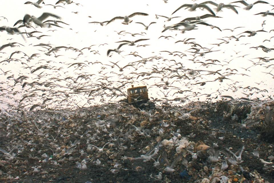 Об отходах, грозящих поглотить все живое, стали не только говорить, но и внедрять программы по их переработке.