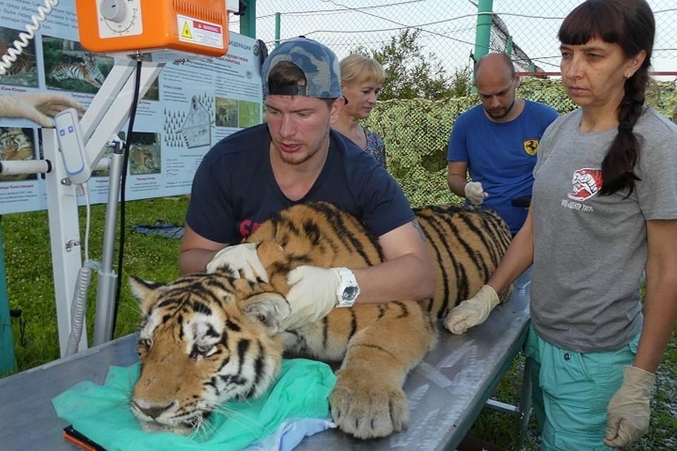 фото зубов тигра