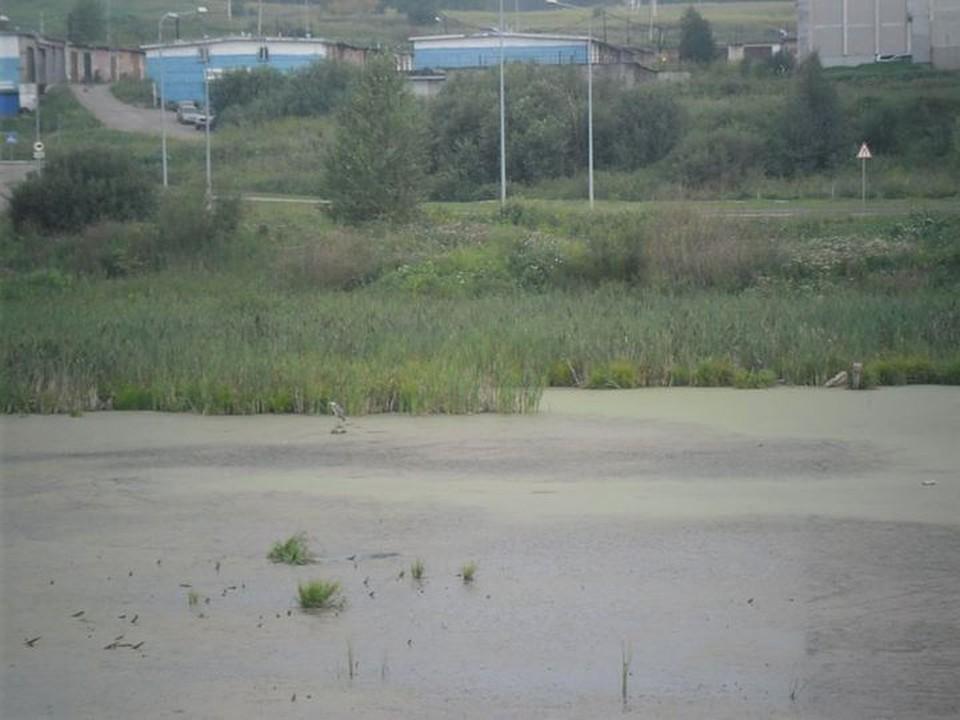 Фото: МБУ Защита населения и территории города Новокузнецка