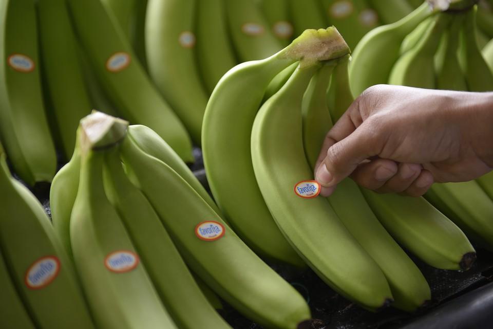 Клуб банан москва клуб танцевальный ночной