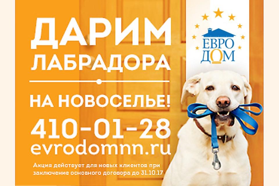 Компания «Евродом» дарит щенка лабрадора каждой семье, купившей таунхаус до 31 октября 2017 года. Фото предоставлено компанией «Евродом».