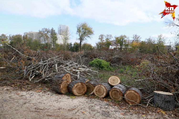"""Зачем в барнаульском парке """"Изумрудный"""" вырубают деревья"""