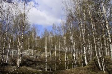«Экотех-2017»: Как защитить российский лес