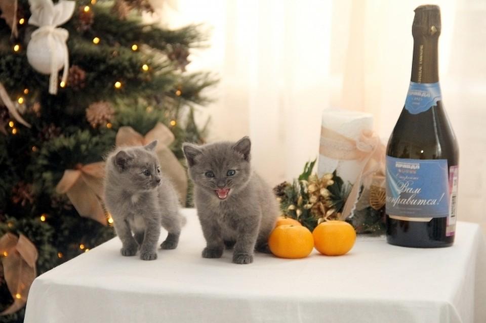 На Новый год Михаил Матвеев сам чистил селедку, а Борис Грим ...