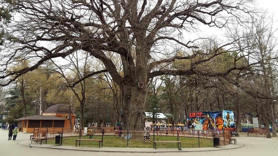 В парке оголяется видео 11