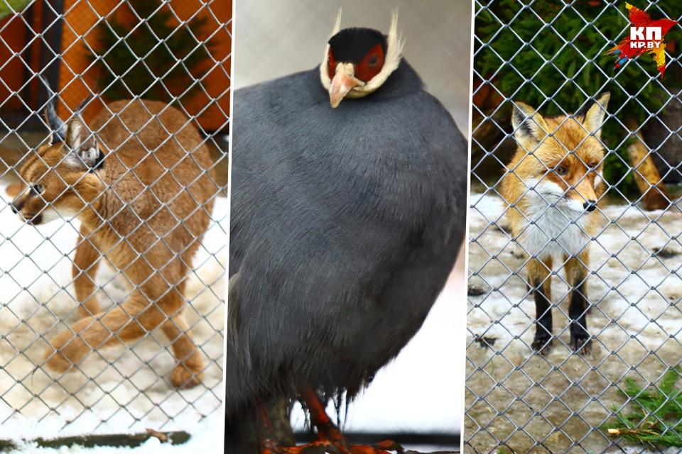Как ждут весну в минском зоопарке