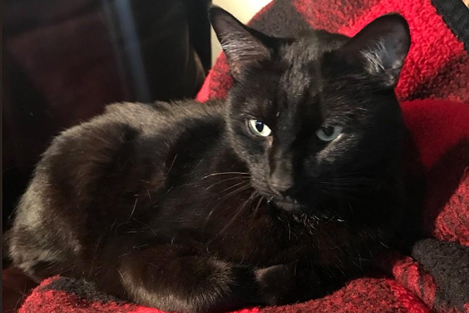 За пять лет кот успел побывать в соседнем городке, попасть в приют и чудом спастись из очереди на усыпление.