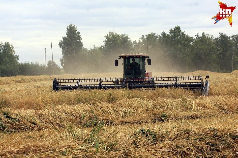 Сбор урожая зерна превысил спрос на внутреннем рынке