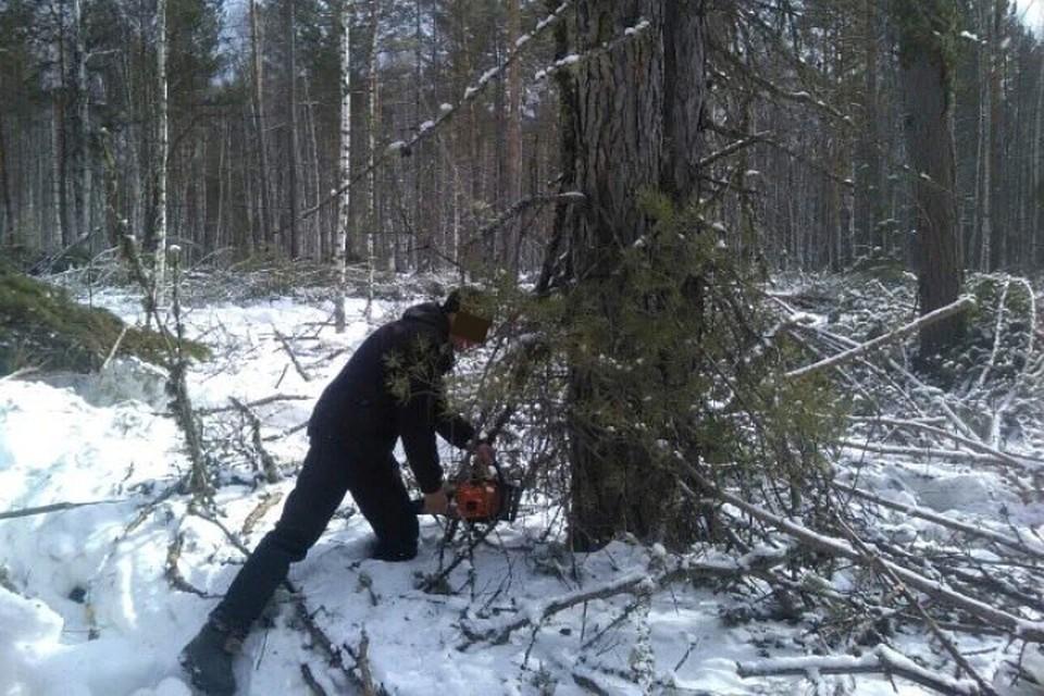 Полиция задержала банду, которая вырубила леса на 56 миллионов рублей в Иркутской области