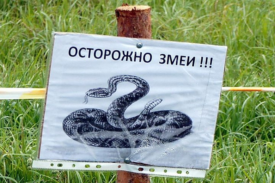 Картинки о змеях с надписями