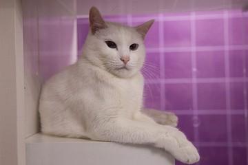 Мурчу-мурчу – предсказать хочу: кот Ахилл из Эрмитажа стал официальным оракулом ФИФА