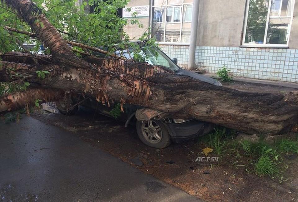 Кроссовер прижало деревом в Новосибирске.