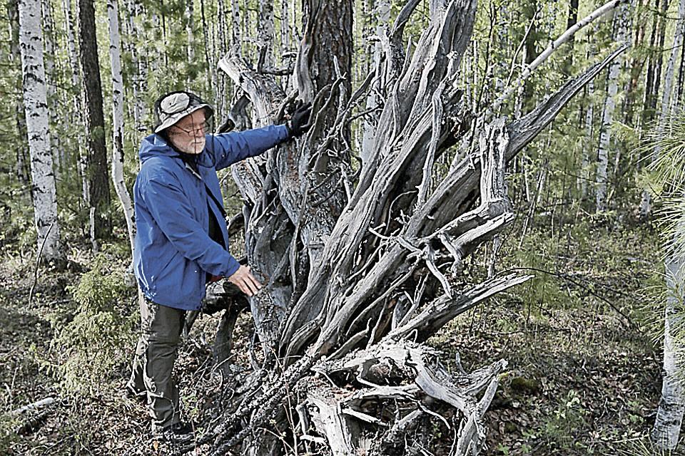На месте взрыва до сих пор сохранились деревья, вырванные с корнем чудовищной силой.