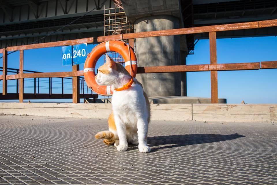 Коту по душе бетон рабочего моста. Фото: Кот Моста/Facebook.
