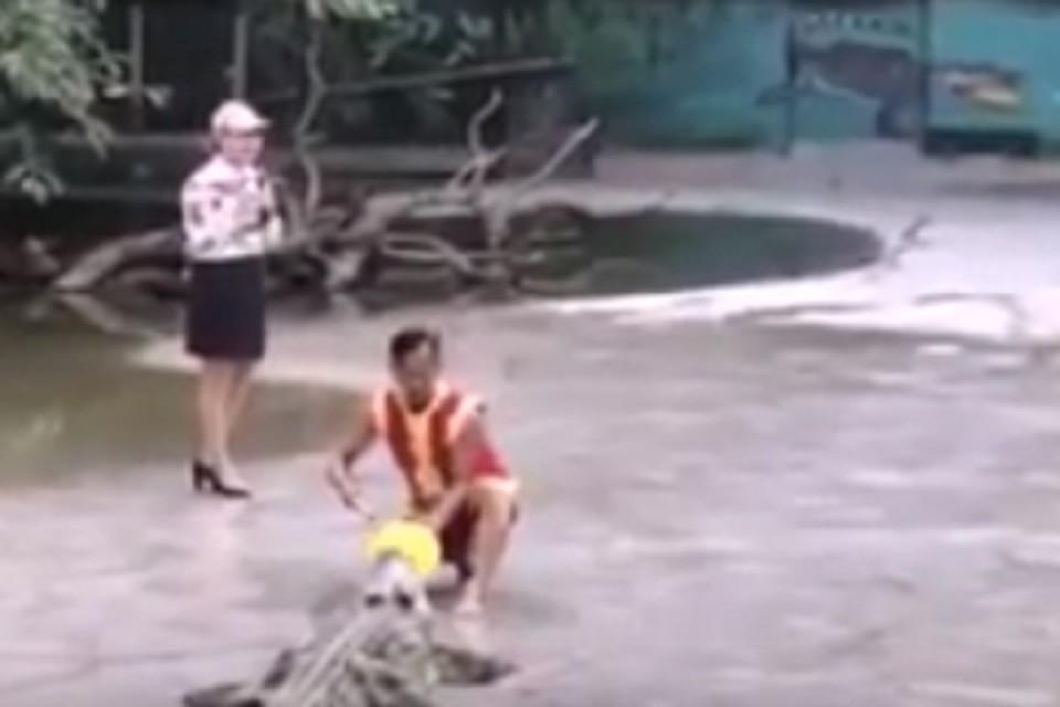 Дрессировщик во время шоу упал в бассейн с крокодилами. ФОТО: стоп-кадр