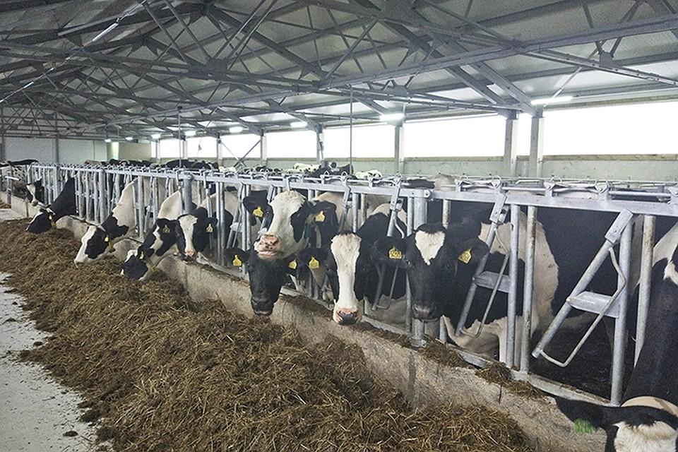 """""""Родина"""" - один из основных производителей молока для яросалвцев"""