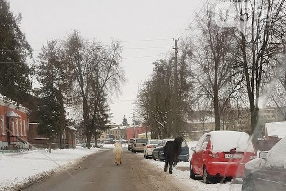 По Гродно бегали бесхозные пони. Фото с сайта 015.BY