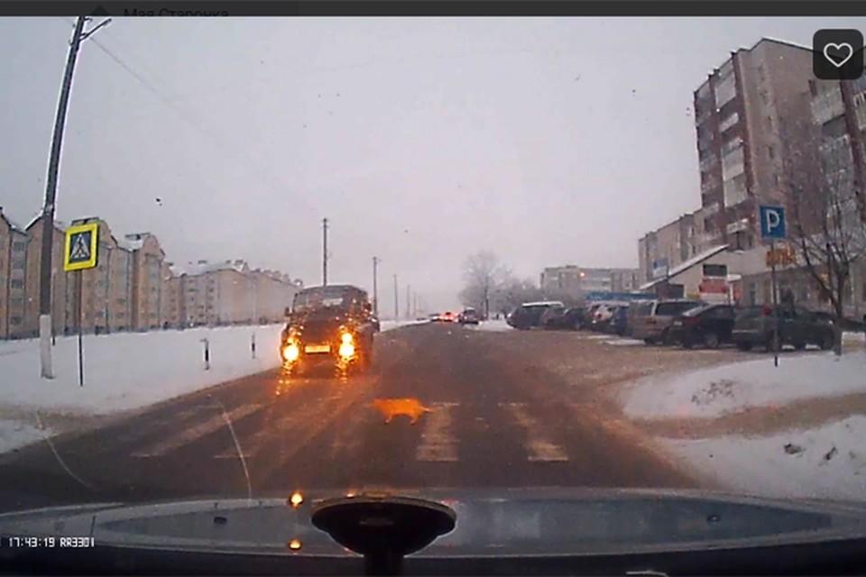Автомобили остановились, чтобы дать пройти необычному пешеходу. Фото: кадр из видео.