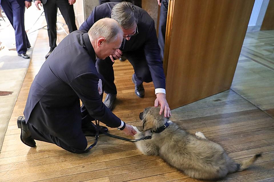 Александр Вучич задумал подарить гостю собаку, как делали это до него коллеги из Болгарии, Японии и даже Туркмении. Фото: Михаил Климентьев/ТАСС