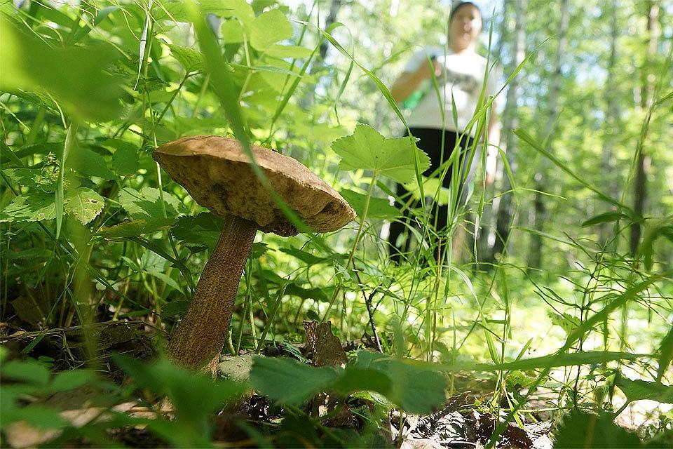После закона о валежнике депутаты возьмутся за грибников и сборщиков лесных ягод.