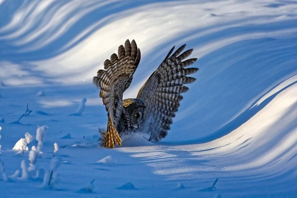 Редкая удача: в Казани во время прогулки по парку сняли ночную охоту совы