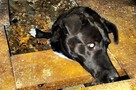 Мурманские спасатели вытащили собаку, которая намертво застряла в стальном гараже