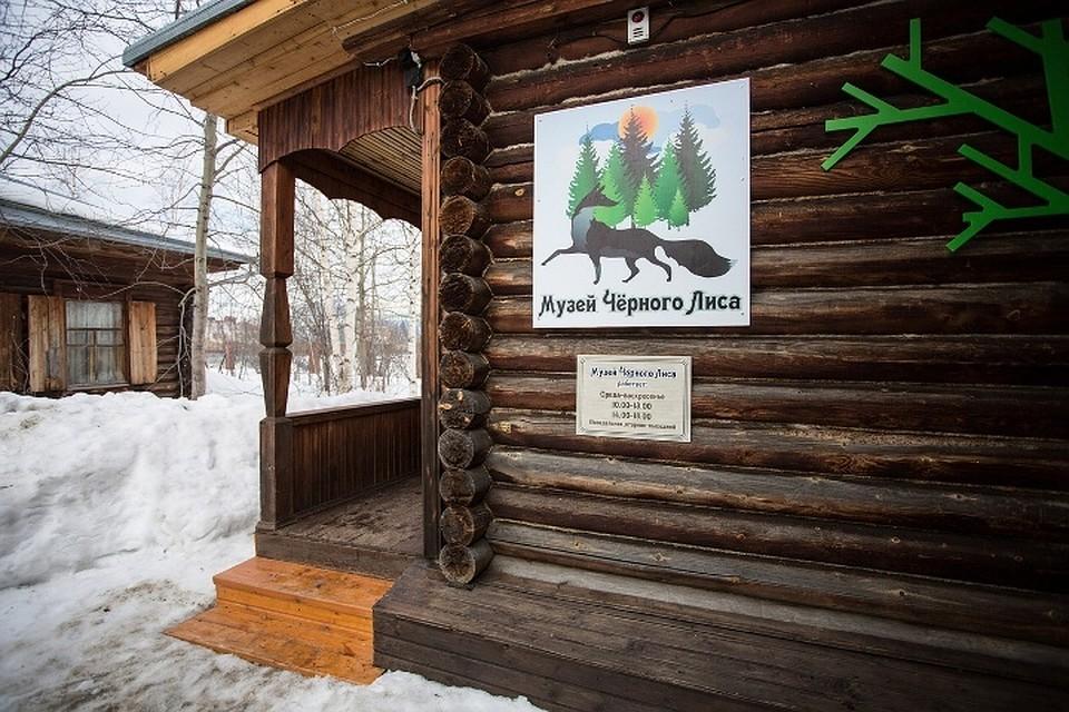 2df707a95b6 Музей чёрного лиса в Сургуте обновил экспозицию