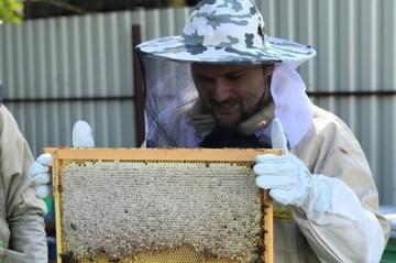 Турне по Кубани: пчелы из Владимира приехали встречать южную весну