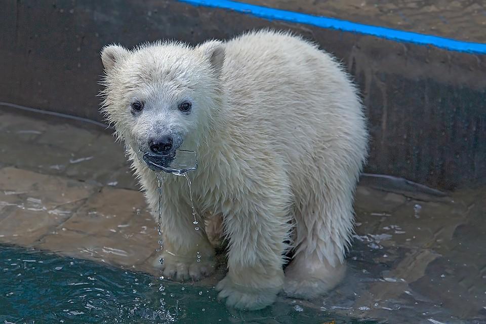 возможности картинки мокрый медведь завтра возьмём