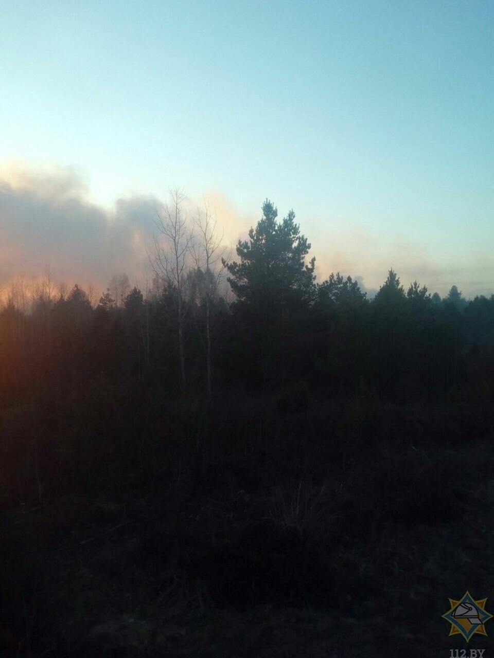 Вдоль автодороги P42 за агрогородком Гожа Гродненского района горит лес. Фото: МЧС