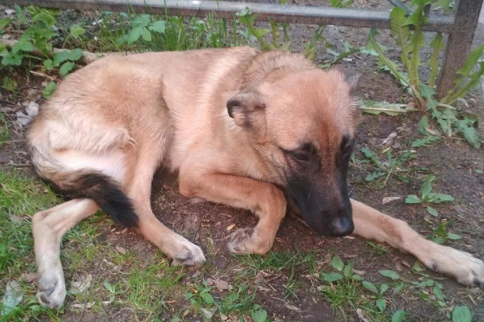 Хозяин выбросил свою собаку с четвертого этажа. Фото: vk.com/kolpino_cats_and_dogs