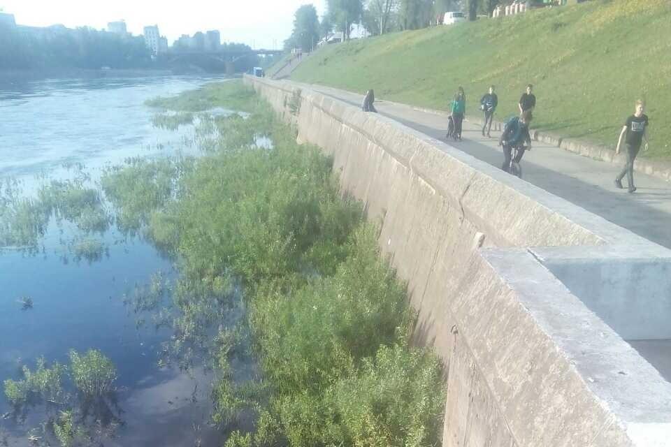 В Витебске ребенок ехал на велосипеде и упал в реку. Фото: МЧС