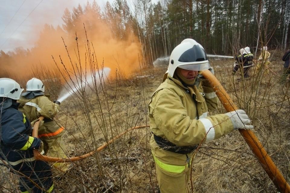 В июне лесная подстилка в окрестностях Воронежа горела несколько раз
