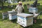 Пчелиный апокалипсис: в Кировской области массово гибнут пчелы