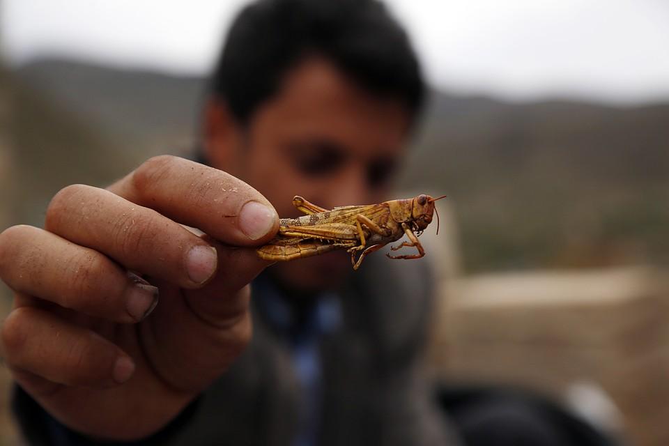 Производство хитина из личинок Черной львинки | ООО