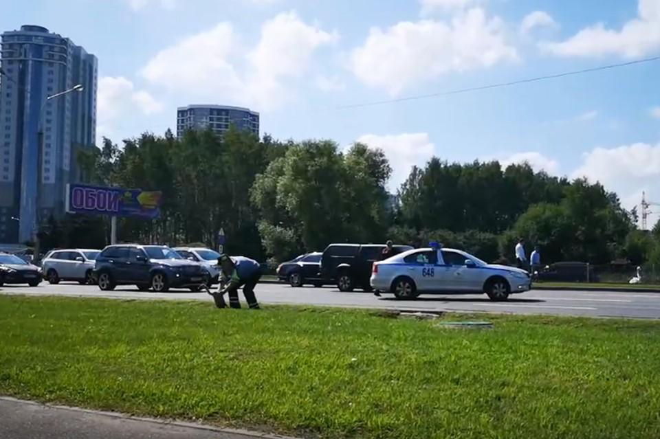 Сотрудники ГАИ перевели через дорогу лебедей. Фото: скриншот видео.
