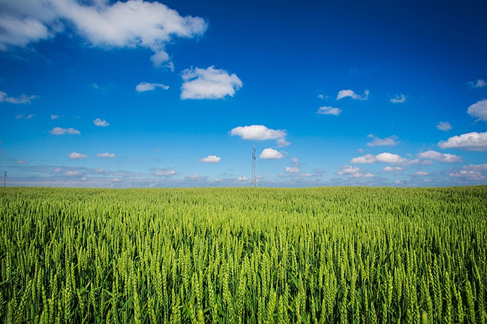 В настоящее время в геосервис загружены 1876 земельных участков сельскохозяйственного назначения на территории Амурской области и Приморского края