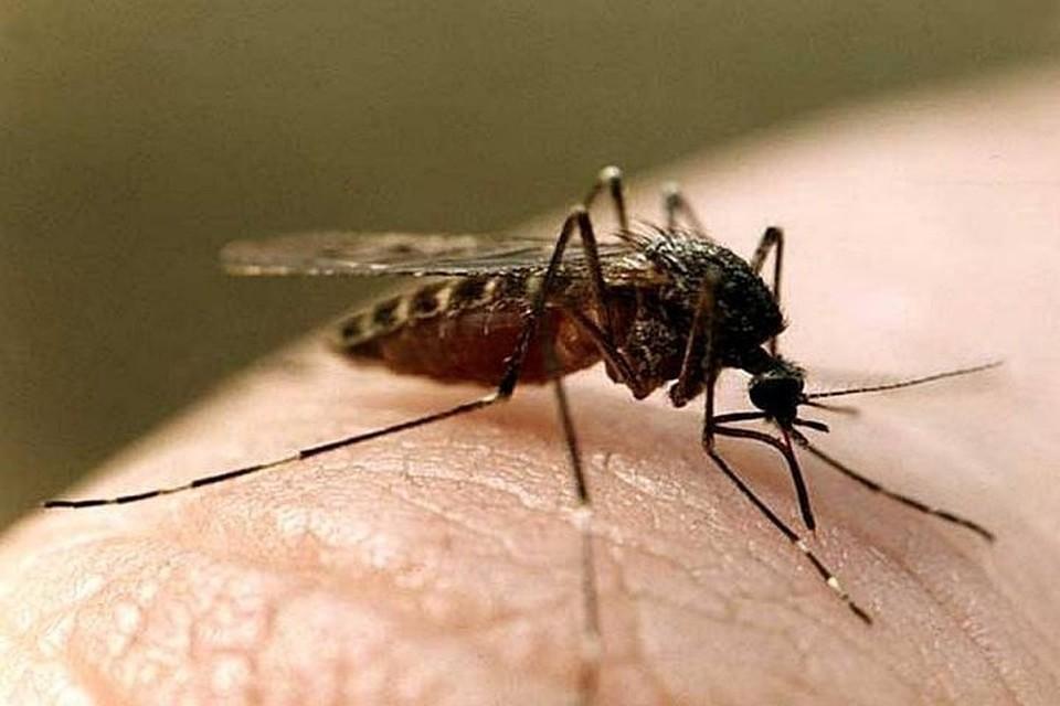 Комары переносят человеку даже паразитов