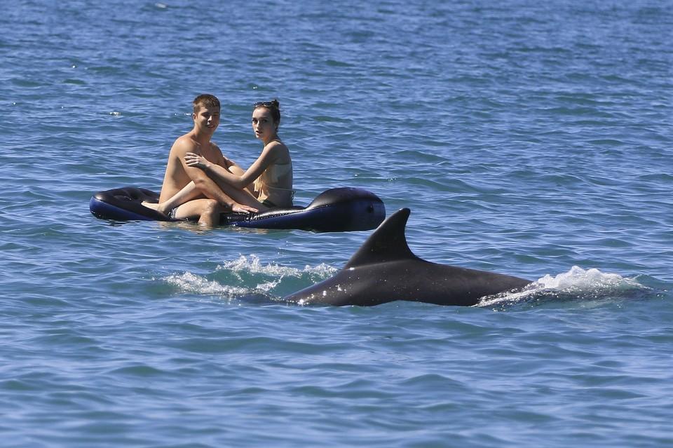 Дикие дельфины очень близко подплывают к людям.
