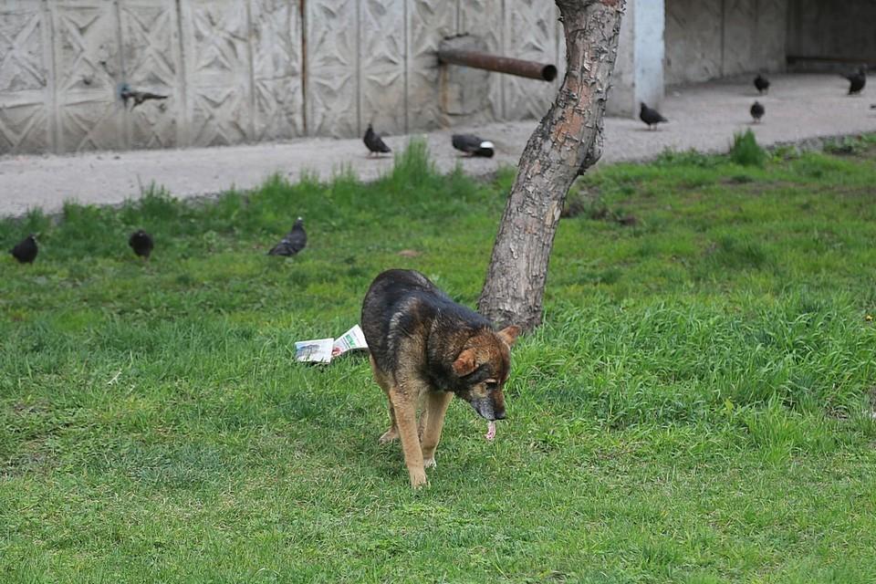 Чиновников мэрии Красноярска обвиняют в плохом отлове бродячих собак