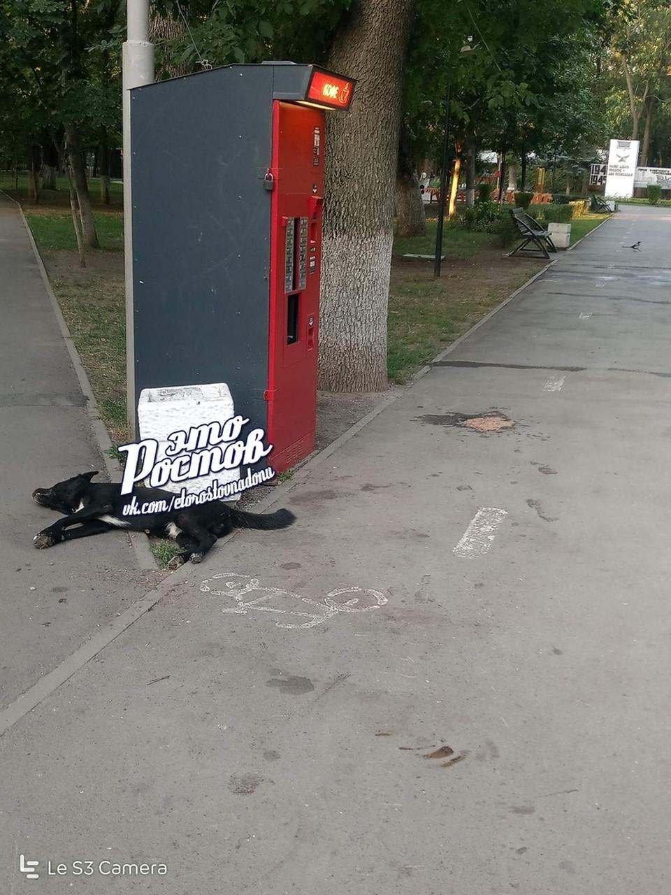 Мертвую собаку нашли в парке Островского. Фото: соцсети